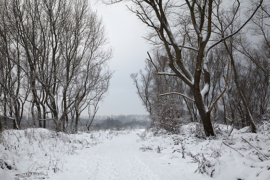 Winter landscape at 'Het Zwin'