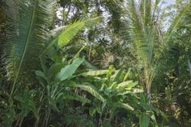 Tropical plants.