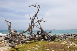 Bonaire landscape.