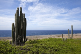 Cactuses on Bonaire.