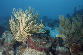 Underwater landscape at Bonaire.
