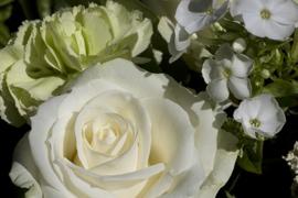 White flowers. V7BEL0929RF
