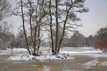 Winterlandschap V10BEL1215